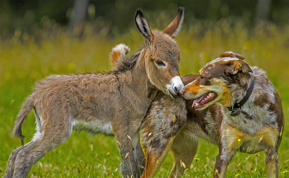 Baby Donkey And A Dog Friendship
