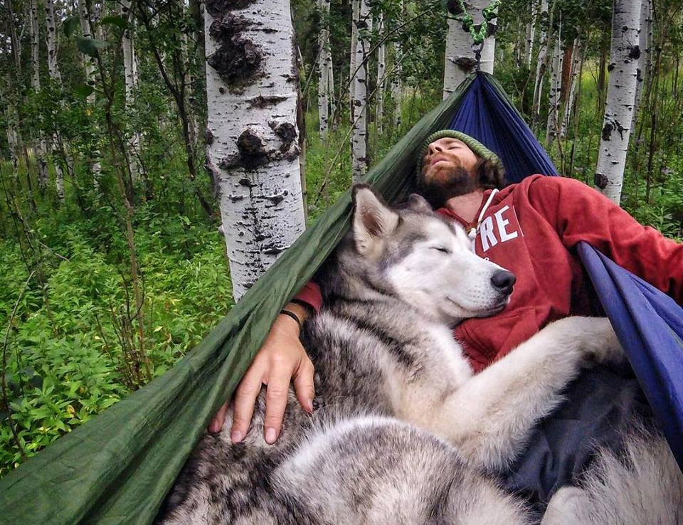 Tree Camping With A Dog