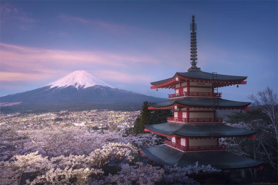 Sunrise Over Fully-Blooming Sakura Garden Under Bellow Mt. Fuji