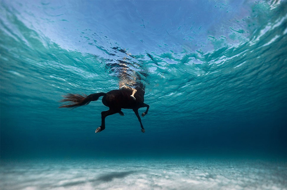Swimming With The Horse