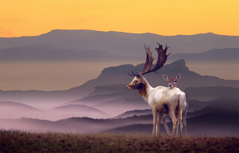 Deer Family In A Perfect Landscape
