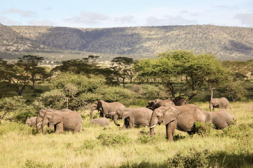 Elephants of Serengeti Tanzania