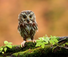 The Amazing World Of Owls In Photography