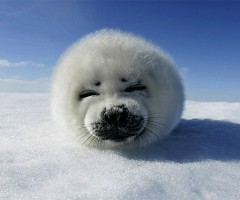 super cute baby seal