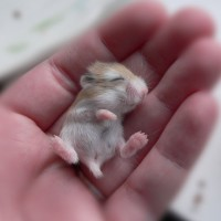 Super Cute Baby Animals in Human Hands