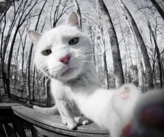 The Amazing World Of Cats In Photography