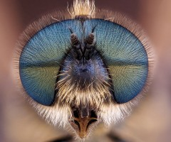 fly head close-up