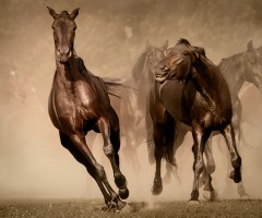 beautiful running horses