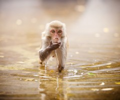 cute monkey takes a sip