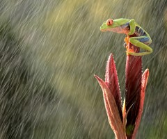 frog on heavy rain
