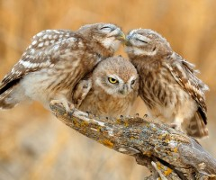 you two owls should get a room