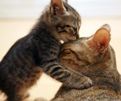 adorable kitty kiss