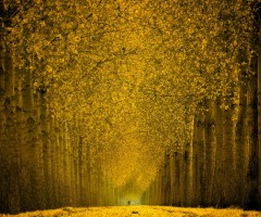 splendid yellow forest