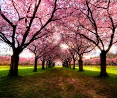 World's Most Beautiful Trees Photography PART 2