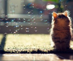 kitten enjoys bubbles