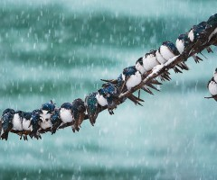 birds in the snowstorm