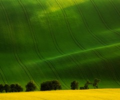 green waves on field