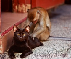 monkey gives cat a back massage