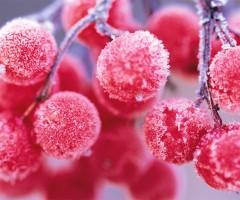frozen pink berries