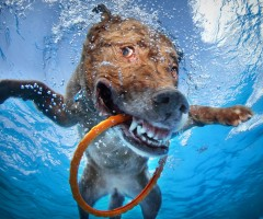 happy underwater dog