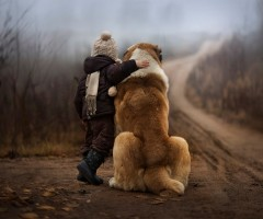 The Amazing World Of Dogs In Photography PART 2