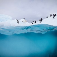 12 Amazing Photos From Freezing Antarctica