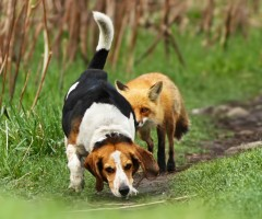 world`s worst hunting dog