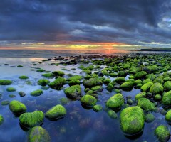 icelandic green rocks coast