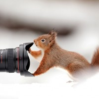 squirrel and a camera
