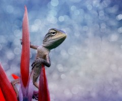 lizard on a flower