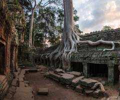 tree on the stone, ta prohm temple, cambodia