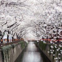 amazing nakameguro canal, japan