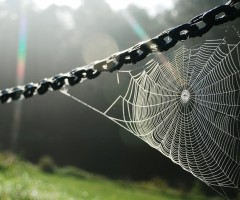 spider web on sunshine