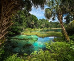 natural freshwater springs, florida