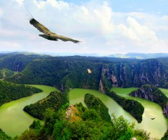 eagle over river uvac, serbia