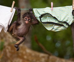 baby monkey on washing line