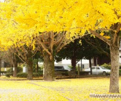 autumn leaves in fukuoka, japan