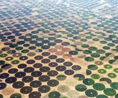 farms in saudi arabia