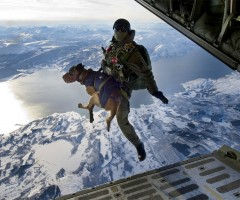 jumping from a plane with a dog