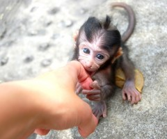 meeting baby monkey, bali