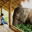 Father, Son And an Elephant