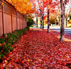 Red Path of Autumn
