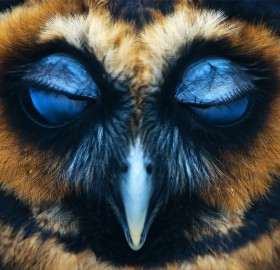 an owl with closed eyes
