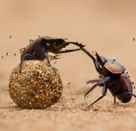 bug gladiators