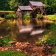 charming duck lake