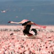 flying pink flamingos