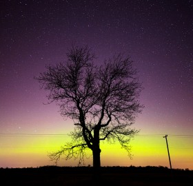 northern light and tree