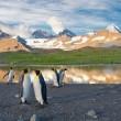 penguins in south georgia island