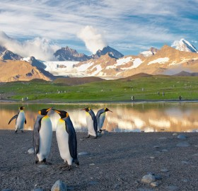 penguins in south georgia island