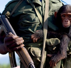 soldier holds baby chimpanzee